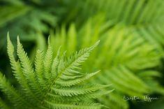 Fern Fine Art Photograph Nature Decor Green Wall Art Fern