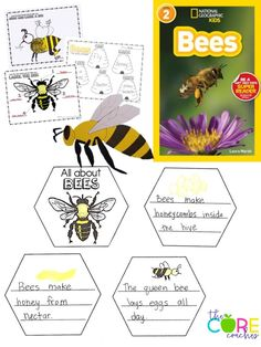 Bee craft, bee writing, bee informational text, label a bee, draw a bee