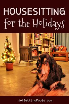 Housesitting over Christmas is one of the best ways to spend the holidays! Since we started traveling full time in 2014, we have taken on the responsibilities of pet sitting over Christmas on 4 occasions – and we think it is an absolutely wonderful way to celebrate the holiday season! Travel Articles, Travel Tips, Travel Around The World, Around The Worlds, Cool Pictures, Cool Photos, Holiday Festival, Travel Couple, Amazing Destinations