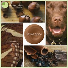 Inspiration for Devine Spice from Devine Color. Well I like the Chocolate Lab very well indeed. Empty Canvas, Red Walls, Earthy, Color Inspiration, Paint Colors, Valley Vineyards, Color Schemes, Collages, Lab