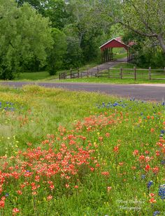 A Covered Bridge in the Texas Hill Country, and a Field of Spring Wildflowers, outside of Chappell Hill, Texas Texas Hill Country, Country Life, Country Roads, Champs, Only In Texas, Spring Wildflowers, Felder, Texas Travel, Covered Bridges