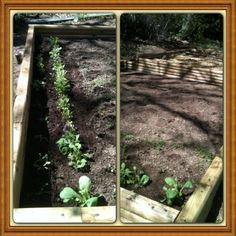 DIY garden! Home Depot for the wood...Ace Hardware for the seeds...