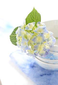 hortensienblu%CC%88ten-wunderschoen-gemacht.jpg (450×656)