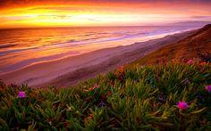 ocean and flowers paintings | Beach Ocean Sunset Plant flowers shore coast sea waves sky clouds ...