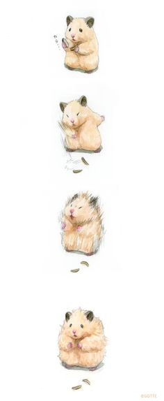 Cute Anime Boy, Anime Art Girl, Japanese Hamster, Rainy Day Drawing, Hamster Pics, Cutest Animals On Earth, Funny Hamsters, Cute Cat Memes, Cut Animals