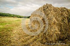 One of many hay bales found in the fields in mid summer.  Ready and waiting to…