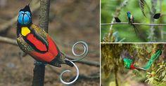 13 aves de colas alucinantes