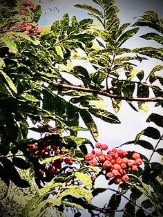 Tupun tupa: Nauti elämästä Helen Keller, Plants, Plant, Planets