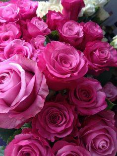 Pink Roses ❤️