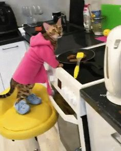 Hilarious. I wish my cats would make breakfast for me
