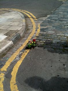 Guerilla gardening  (lol - that was the description from the person I pinned it from - hilarious)