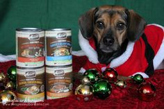 It is Day 9 of Stocking Stuffer Giveaways and we are featuring Merrick Chunky Can Dinners. Stop by to enter to win a fuller Christmas Stocking for your dog!