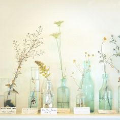 simple beauty for in my new room! I love the bottle idea! Bottle Vase, Bottles And Jars, Glass Bottles, Beer Bottles, Mason Jars, Inexpensive Flower Arrangements, Elegant Centerpieces, Centerpiece Ideas, Floral Centerpieces