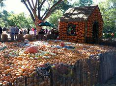 Fall Blooms Dallas Arboretum