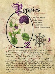 Poppies-page (a_granger) Tags: halloween book magick witch magic spells halloweendecorations spellbook witchesbrew grimoire bookofshadows witcheskitchen Wiccan, Magick, Witchcraft, Illustration Botanique, Botanical Illustration, Collages D'images, Imprimibles Halloween, Witch Herbs, Foto Transfer