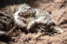 Kattenfotograaf Leiden - Cherished Friend Session kat Julius-8
