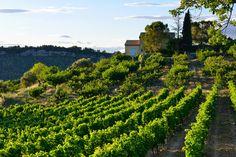 Bellet, appellation de Provence (trop) méconnue !  http://www.vins-independance.com/3528-clos-saint-vincent