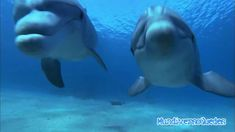 Dolphins Chillout - Sweet Harmony  I wish you a wonderful day/afternoon/evening/night where ever you are, what ever you do.    http://reiki-spiritualhealer-ernstkoch.blogspot.ch/