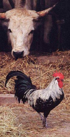 Op de boerderij in de stal. Meer over stallen? Ga naar: http://www.milkstory.nl/artikel/hoe-duurzaam-de-vrijloopstal