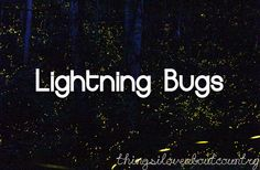 Lightning Bugs  My favorite Oklahoma bug...and there are a lot of bugs to choose from!