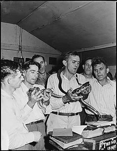 Snake handling is a religious ritual in a small number of Pentecostal churches in the U.S., usually characterized as rural and part of the Holiness movement. The practice began in the early 20th century in Appalachia.
