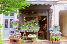 What a lovely florist shop front!  The name is Jardin d'Ebene and is at 51 rue Censier.  Gorgeous!!
