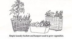 Small Space Gardening Solutions for City Dwellers and Suburbanites - Pioneer Living Survival