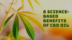CBD oil is a natural remedy derived from the cannabis plant. As the source of both marijuana and hemp, any substance made from cannabis immediately raises concerns around its legality and safety. Cannabis Plant, Medical Cannabis, Overcoming Addiction, Cardiovascular Disease, Pain Relief, Natural Remedies, Benefit, Merchant Account
