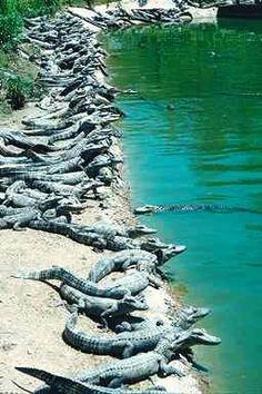 Natchitoches, Louisiana (at The Alligator Park to clarify!! :)