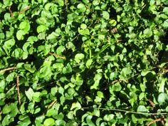 Naturaleza +  Verde | Only Grassx PoL( textura hallada en BsAs | ftexture found in BsAs )