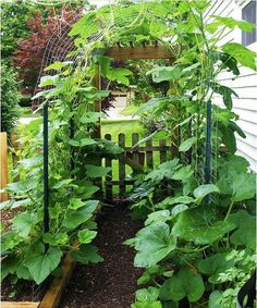 Trellis arch - possible  for cucumbers, squashes or beans .Save space & add creativity to the garden. Great idea!!