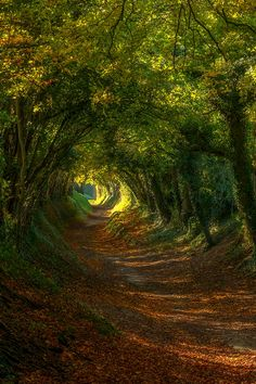 wonderous-world:  Sussex Englandby Sam Moore