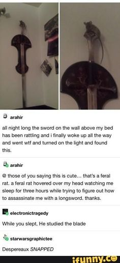 That is Aragorn's sword. This rodent is trying to be the next king of Gondor give him a little respect Stupid Funny, Funny Cute, The Funny, Hilarious, Funny Memes, Jokes, Lol, Funny Tumblr Posts, Funny Animals