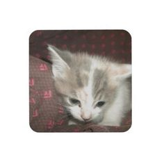 I see a bug #drink #coaster!  #Cute #kittens galore are in my #zazzle #store!  http://www.zazzle.com/conquestkitty*