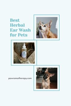 Herbal Ear Wash for Dogs and Cats. Natural, handmade ear cleaner created by holistic veterinarian, Dr. Deneen Fasano. All natural ingredients using herbs and essential oils. Dog Ear Wash, Dog Ear Cleaner, Organic Witch Hazel, Dogs Ears Infection, Dog Nutrition, Ear Cleaning, Healthy Pets, Dog Boarding, Pet Beds