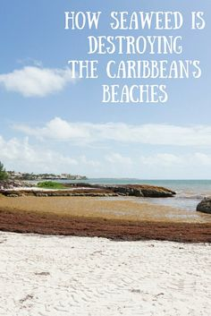2015 was a bad year for Caribbean seaweed, and 2016 isn't shaping up to be much better. The record amount of sargassum that washed up on beaches from Cancun to Antigua marred many a beach vacation and threatened the region's tourism. Unfortunately, visitors to the Caribbean and Mexico's Yucatan Peninsula will probably be facing similar amounts of the unsightly algae again. According to Chuanmin Hu, a professor of optical oceanography at the University of South Florida, satellite imagery…