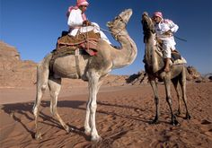 Wadi Rum kamelen