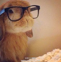 How this bunny can look both snobby and cute, I have no idea,