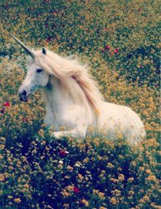 Unicorn Pegasus Crystal Pumps Heels | Sapatos divertidos