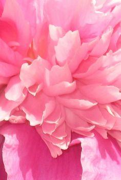shades of pink | Shades of Pink - Photography Blog
