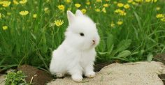 Amazing - Very Cute Baby Animals Pictures. Rabbit Pictures, Cute Baby Pictures, Cute Animal Pictures, Cute Baby Bunnies, Cute Cats, Cute Babies, Super Cute Animals, Cute Little Animals, Animals And Pets