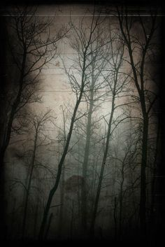 Woods photograph haunted forest dark goth von judeMcConkeyPhotos, $30,00