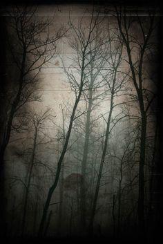 Woods photograph haunted forest dark goth von judeMcConkeyPhotos, $30,00