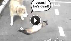 http://www.guardalo.org/il-cane-trova-un-gatto-morto-ma-10580/1666842422/