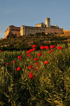 Assisi - Papal Basilica of St. Francis (1253 AD)  Oct. 2010 and Oct.2012  One of my favorite places to visit.  Seeing St. Francis's Tomb is very moving.