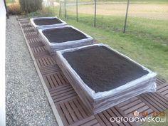 Warzywa uprawiane w skrzyniach, pojemnikach - strona 50 - Forum ogrodnicze - Ogrodowisko