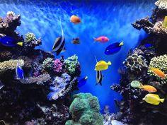 Top 10 Wonders of the Underwater World