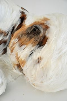 Featherchild by Lucy Glendinning