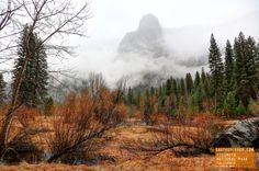 A Foggy Day in Yosemite National Park