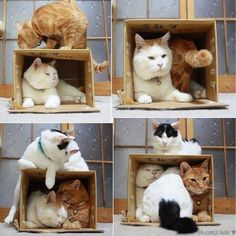 four cats too many